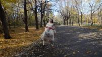 """Jaune : Spectre"", solo performance (2015) Photo by Nania Sergi"
